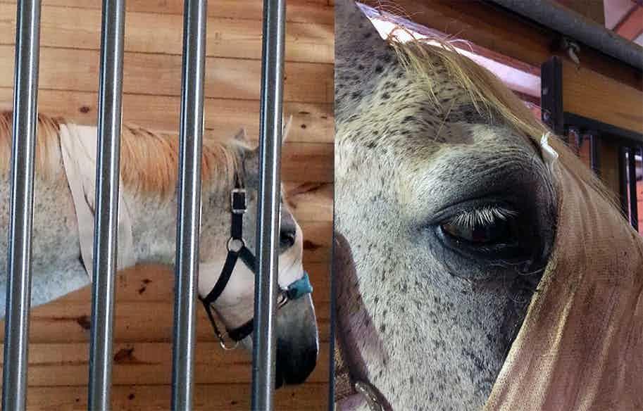 Gambler Tryon Equine Case Study